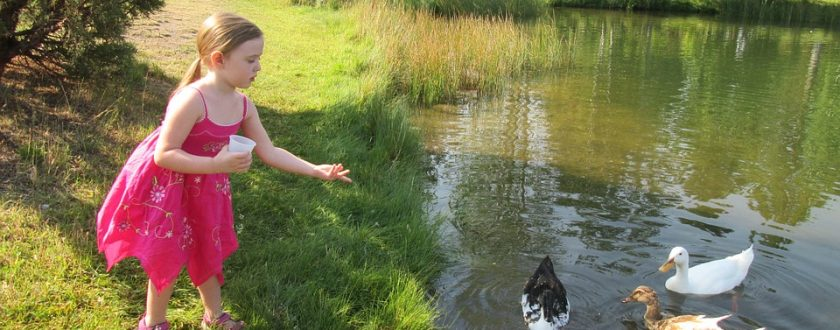 Did You Know You're NOT Supposed To Feed Bread To Ducks?